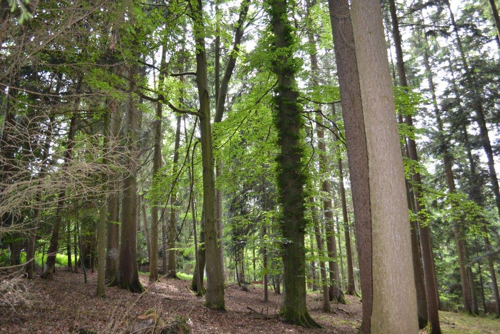 Waldgrundstück 12.000 m² bei Reischach zu verkaufen