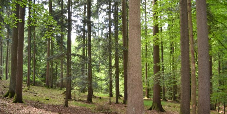 Wald, Bild 4