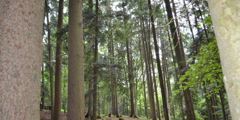 Wald, Bild 3