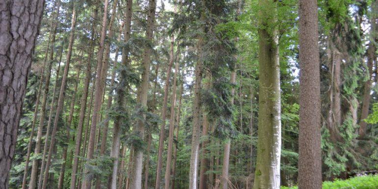 Wald, Bild 2