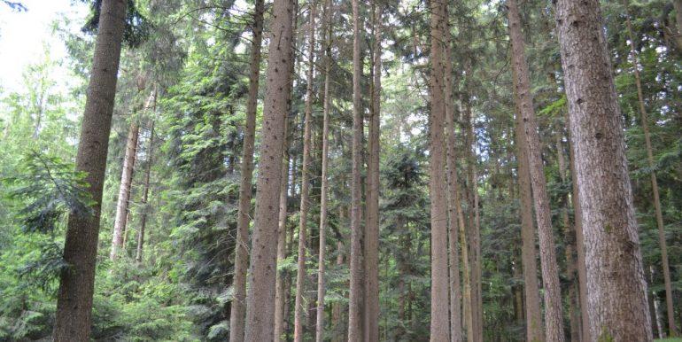 Wald, Bild 1