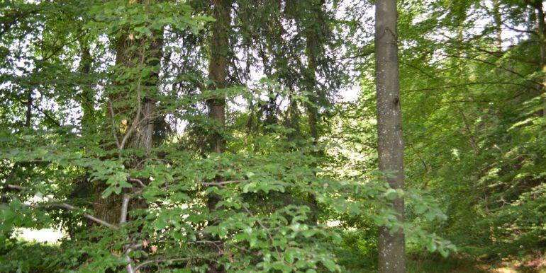 Wald, Bild 8
