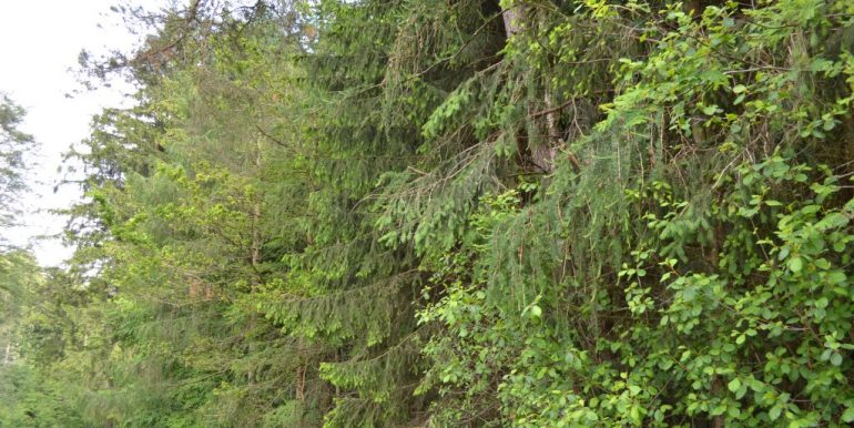 Wald, Bild 7