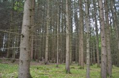 Wald, Bild 6
