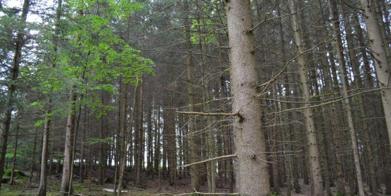 Wald, Bild 5
