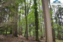 Wald bei Reischach, verkauft 2020